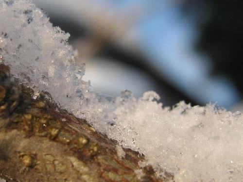 IMG_3711新雪.jpg