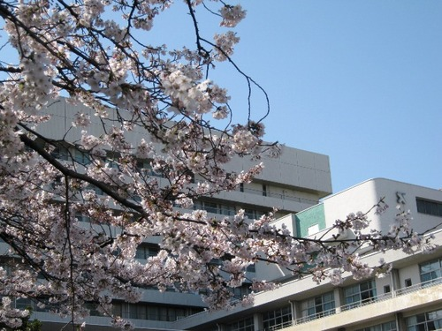 IMG_9831桜040612.JPG